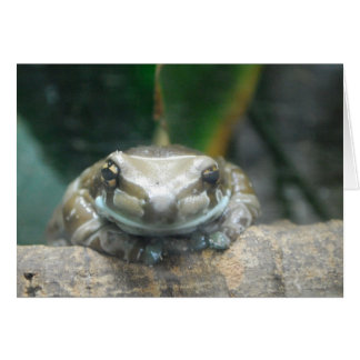 Amazon Milk Frog Greeting Card