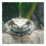 Amazon Milk Frog  Invitations