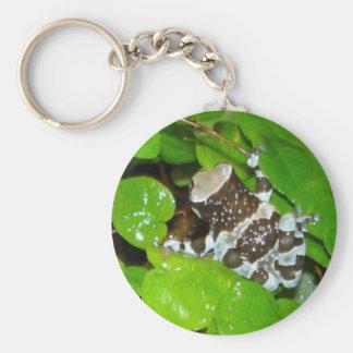 Amazon milk frog key chain