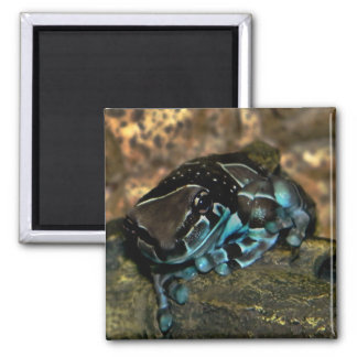 amazon milk frog magnet