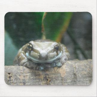 Amazon Milk Frog Mouse Pad
