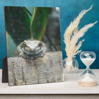 Amazon Milk Frog Plaque