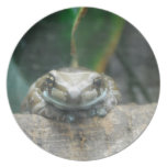 Amazon Milk Frog Plate