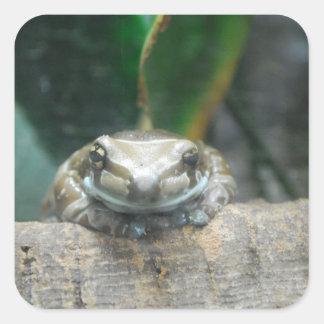 Amazon Milk Frog Sticker