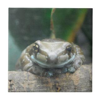 Amazon Milk Frog Tile