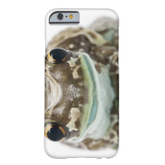 Amazon Milk Frog - Trachycephalus resinifictrix Barely There iPhone 6 Case