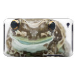 Amazon Milk Frog - Trachycephalus Resinifictrix Barely There iPod Case