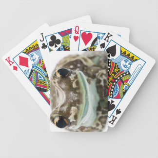 Amazon Milk Frog - Trachycephalus Resinifictrix Bicycle Playing Cards