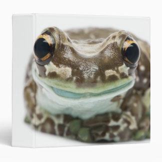 Amazon Milk Frog - Trachycephalus Resinifictrix Binder
