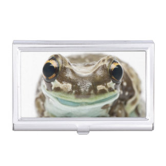 Amazon Milk Frog - Trachycephalus Resinifictrix Business Card Case
