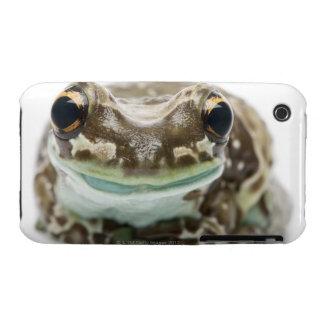 Amazon Milk Frog - Trachycephalus Resinifictrix Case-Mate iPhone 3 Cases