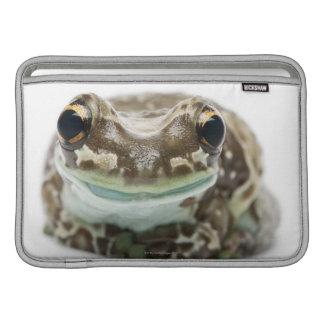 Amazon Milk Frog - Trachycephalus Resinifictrix MacBook Sleeves
