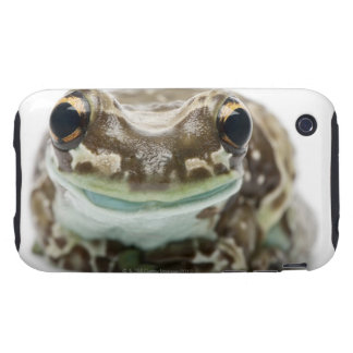 Amazon Milk Frog - Trachycephalus resinifictrix iPhone 3 Tough Covers