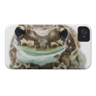 Amazon Milk Frog - Trachycephalus resinifictrix iPhone 4 Case