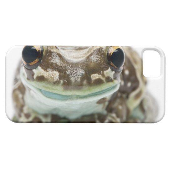 Amazon Milk Frog - Trachycephalus resinifictrix iPhone SE/5/5s Case