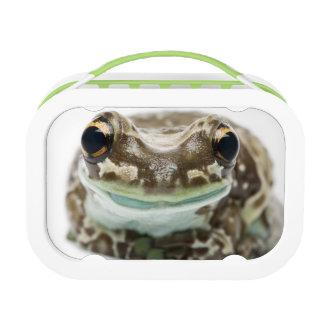 Amazon Milk Frog - Trachycephalus Resinifictrix Lunch Box