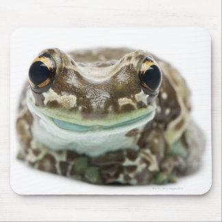 Amazon Milk Frog - Trachycephalus resinifictrix Mouse Pad