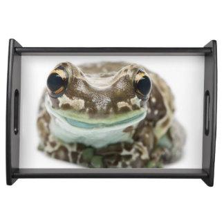 Amazon Milk Frog - Trachycephalus Resinifictrix Serving Tray