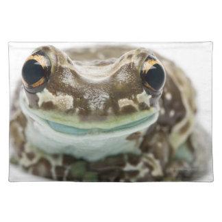Amazon Milk Frog - Trachycephalus Resinifictrix Placemat