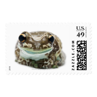 Amazon Milk Frog - Trachycephalus resinifictrix Postage Stamps