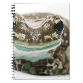 Amazon Milk Frog - Trachycephalus resinifictrix Spiral Notebook