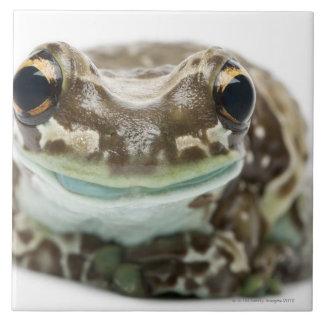 Amazon Milk Frog - Trachycephalus Resinifictrix Ceramic Tile