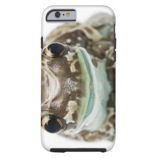 Amazon Milk Frog - Trachycephalus resinifictrix Tough iPhone 6 Case