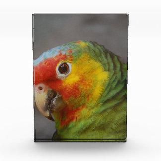 Amazon Parrot Awards