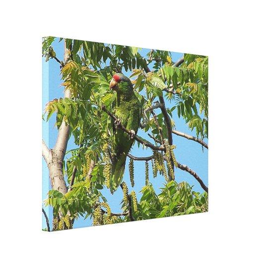 Amazon Parrot Bird Wrapped Canvas