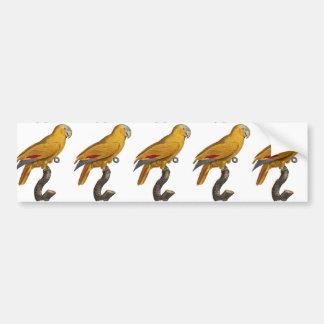 Amazon parrot car bumper sticker