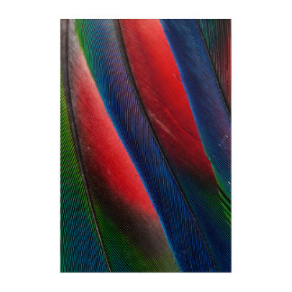 Amazon parrot feather design acrylic wall art