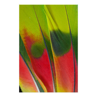 Amazon Parrot Feather Design Poster