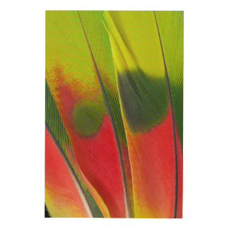 Amazon Parrot Feather Design Wood Print
