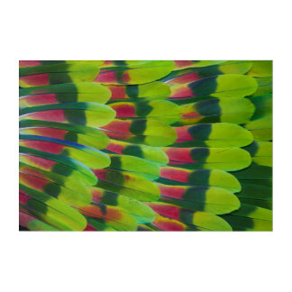 Amazon Parrot Green Feather Design Acrylic Wall Art