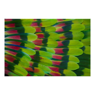 Amazon Parrot Green Feather Design Poster