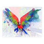 Amazon Parrot Macaw Postcards