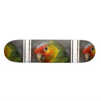 Amazon Parrot Skateboards