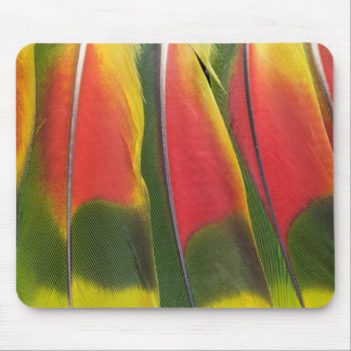 Amazon Parrot Tail Feathers Mouse Pad