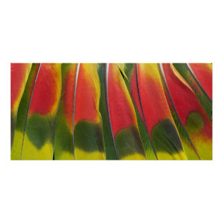 Amazon Parrot Tail Feathers Poster