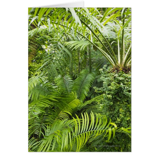 Amazon Rainforest, Amazonia, Brazil 2 Card