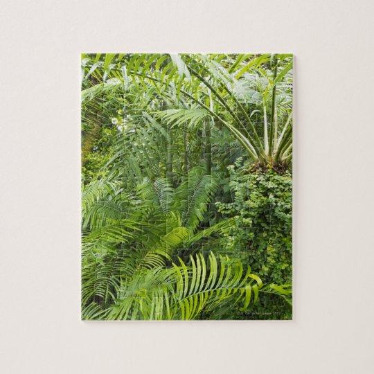 Amazon Rainforest, Amazonia, Brazil 2 Jigsaw Puzzle