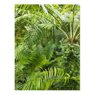 Amazon Rainforest, Amazonia, Brazil 2 Postcards