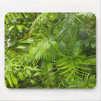 Amazon Rainforest, Amazonia, Brazil Mouse Pad