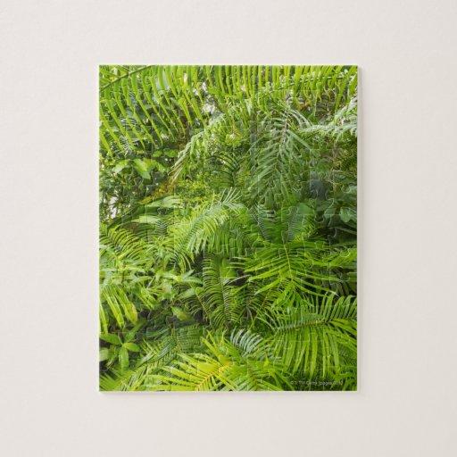 Amazon Rainforest, Amazonia, Brazil Puzzle
