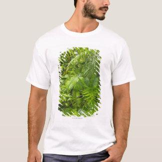 Amazon Rainforest, Amazonia, Brazil T-Shirt