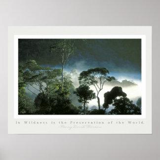 Amazon Rainforest at Dawn Poster