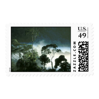 Amazon Rainforest Postage Stamp