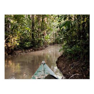 Amazon Rainforest, Puerto Maldanado, Peru. Postcard