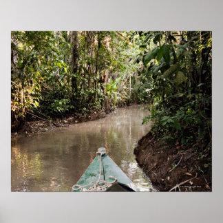 Amazon Rainforest, Puerto Maldanado, Peru. Poster