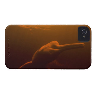 Amazon River Dolphin (Inia geoffrensis) or Boto, iPhone 4 Case
